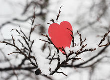 Heart, valentines day card Royalty Free Stock Photo