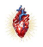 Heart Vector Art Royalty Free Stock Image