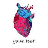 Heart vector health love illustration life medical living art graphic. Heart vector health love illustration life medical living art Stock Photos