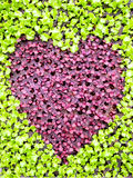 Heart vegetable. Heart shape form by various vegetables Stock Photos