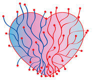 Heart with veins Royalty Free Stock Photo