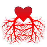 The heart and the veins Royalty Free Stock Image
