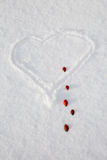 Heart with very on the snow with drops of rose hips Royalty Free Stock Image