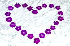 The heart of violet flowers Royalty Free Stock Images