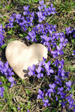 Heart and  violets Stock Photography