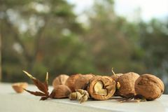 Heart of walnut Royalty Free Stock Images