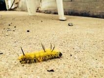 Heart of a Warrior. Canada scenery Bugs caterpillar stock photography