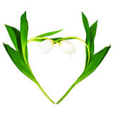 Heart from white tulips. On white background, clipping path Stock Images