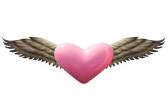 Heart with wings Stock Image