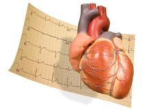 Heart With EKG Royalty Free Stock Image