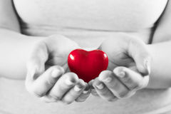 Heart in woman hands. Love giving, care, health, protection. Heart in woman hands. Love giving, care, health, protection concept. Black and white Royalty Free Stock Image