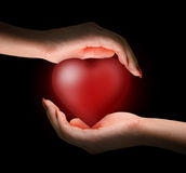 Heart in women's hands Royalty Free Stock Photography