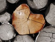 Heart of wood Stock Photo