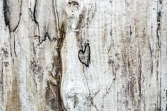 Heart in wood. Wood textura with a naturally formed heart. Heart in wood. Wood textura with a naturally formed heart stock photography