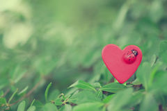 Heart. Wooden red heart of nature Royalty Free Stock Photography