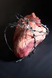 Heart wound  barbed wire. Ox heart wound  barbed wire on black background Stock Photos