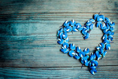 Heart wreath of blue lupines petals and flowers on dark wooden background Royalty Free Stock Photos