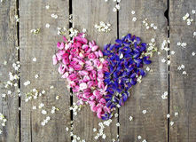 Heart wreath of purple and pink lupines Royalty Free Stock Photos