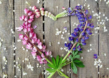 Heart wreath of purple, pink lupines and green leaves Stock Photos