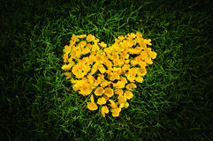 Heart of yellow flowers. Heart symbol is mean love Stock Photos