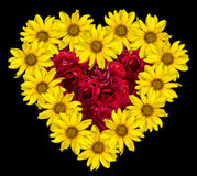 Heart of yellow flowers of decorative sunflowers Helinthus and red roses inside isolated Royalty Free Stock Image