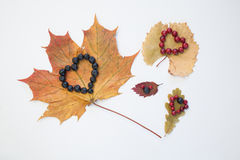 Heart on leaves. Royalty Free Stock Photos