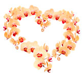 Heart from yellow orchid flowers isolated on white Stock Images