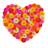Heart of zinnias flower Royalty Free Stock Photography