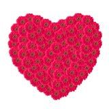 Heart of zinnias flower Stock Photo