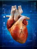 Heartbeat Stock Photography