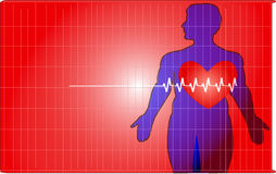 Heartbeat. Cardiology frequency graph with human  anatomy background Royalty Free Stock Images