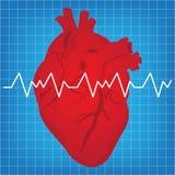heartbeat Στοκ Εικόνες