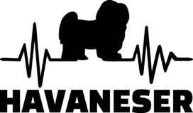 Havaneser frequence german. Heartbeat pulse line with Havanese dog silhouette german stock illustration