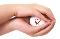 Heartbleed exploit concept. With two hands handling an egg Royalty Free Stock Images