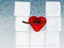 ~ Hearted freddo Uncaring, amore polso del serpente Fotografia Stock