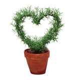 Hearted Plant Stock Image