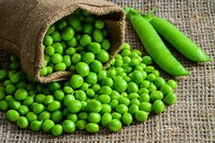 Hearthy fresh green peas and pods on rustic fabric Stock Image