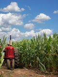 Heartland. Red tractor hiding in a corn field Stock Image