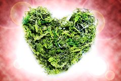 Heartmoss Stockfoto