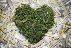Heartmoss. Heart made with moss on clean background Stock Photo
