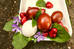 Heartsdo chocolate dos ovos da páscoa e das florescom pervinca Fotografia de Stock Royalty Free
