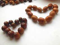 Hearts acorns background Stock Images