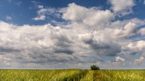 Dancing clouds over lonesome tree stock photos