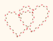 Hearts ants Royalty Free Stock Photography