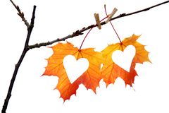 Hearts in autumn leaf Royalty Free Stock Images