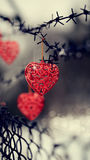 Hearts and barbed wire Royalty Free Stock Photography