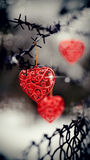 Hearts and barbed wire royalty free stock image