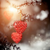 Hearts and barbed wire Stock Images