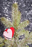Hearts on fir tree branch Royalty Free Stock Photography