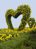 Hearts. A garden of heart - shaped green leaves and flowers in a festival Stock Photos